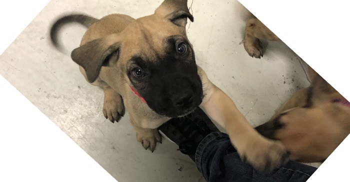 Durham police said two people were arrested after seven puppies were stolen from an Oshawa apartment.
