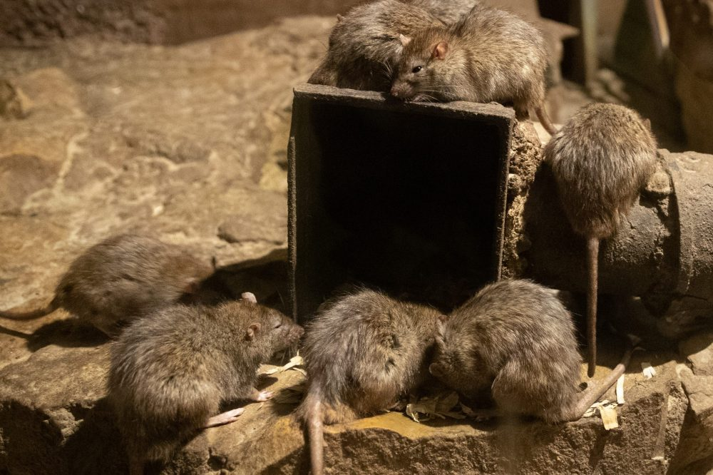 Man falls into pit filled with rats after sinkhole opens on NYC sidewalk