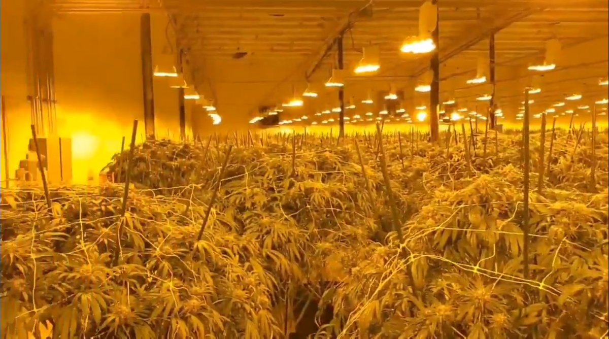 OPP say 'hundreds' of unlicenced pot plants were seized in a raid at a Norfolk county address on Wednesday Oct.7, 2020.