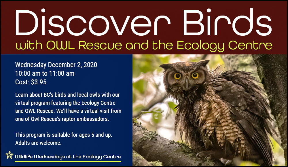 Discover Birds with Owl Rescue and the Ecology Centre Wednesday, December 2, 2020. 10:00 am to 11:00 am Cost: $3.95 https://www.eventbrite.ca/e/128258938939 Learn about BC's birds and local owls with our virtual program featuring the Ecology Centre and OWL Rescue. Discover the beauty of Vancouver's birds and learn about their evolution and adaptations. You'll also get a virtual visit from one of OWL Rescue's raptor ambassadors. This presentation is suitable for ages 5 and up. Adults are welcome. OWL (Orphaned Wildlife) Rehabilitation Society is a non-profit organization whose staff and volunteers are dedicated to the rescue, rehabilitation, and release of injured and orphaned raptors and to educating the public on the conservation and importance of them. Sign up for the Zoom link for the live presentation. The link will go out one hour prior to the presentation.