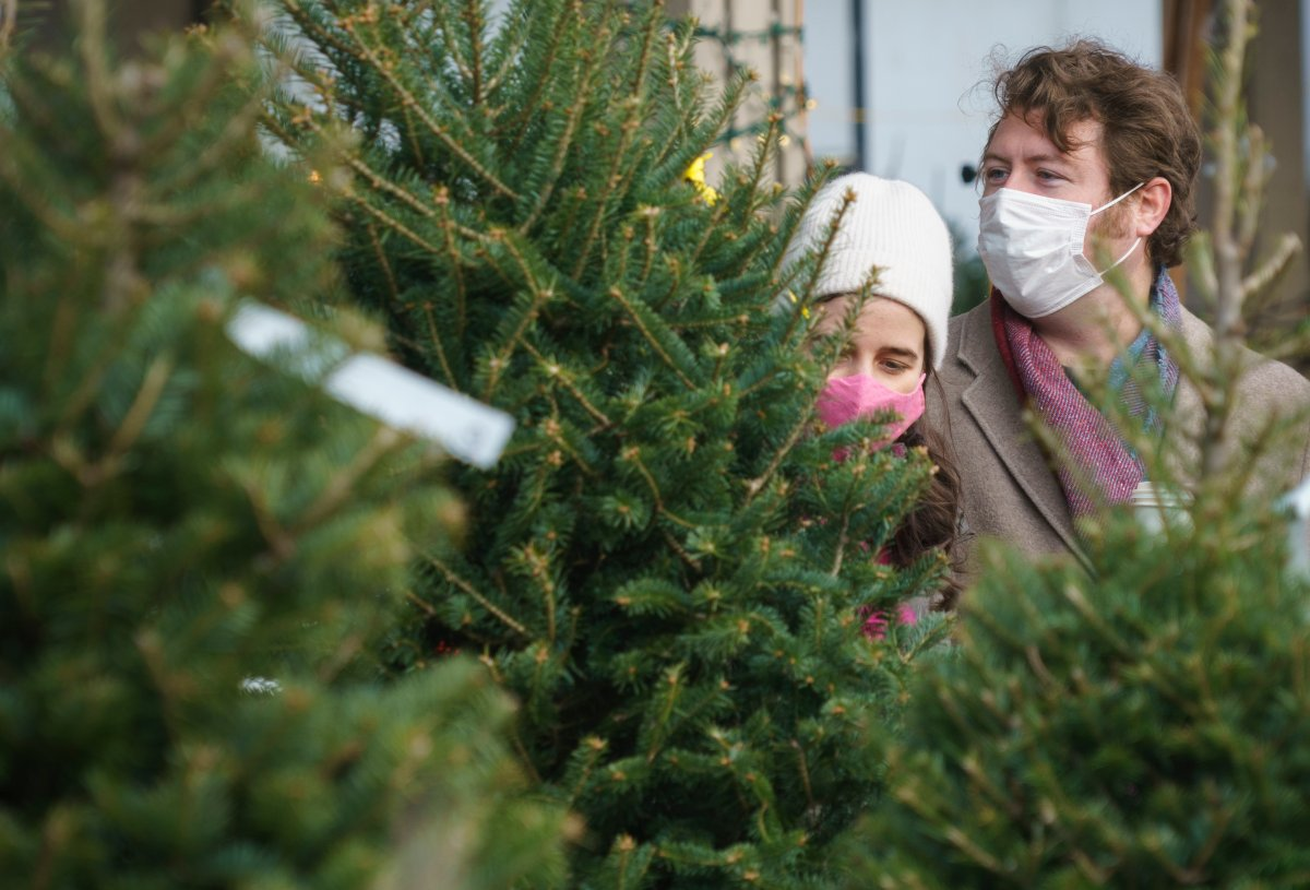 A couple shops for a Christmas tree at a farmers market in Montreal, Friday, Nov. 20, 2020.
