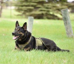Continue reading: Manitoba RCMP dog tracks down injured man
