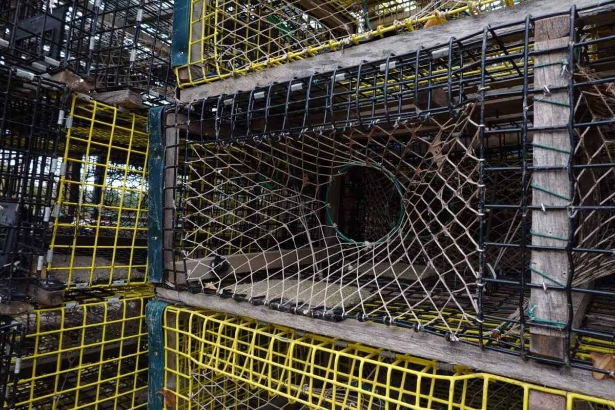 A number of lobster traps near Pictou Landing First Nation on Nov. 5, 2020.