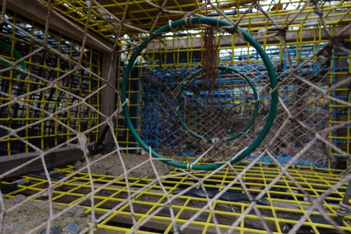 A lobster trap near Pictou Landing First Nation on Nov. 5, 2020.