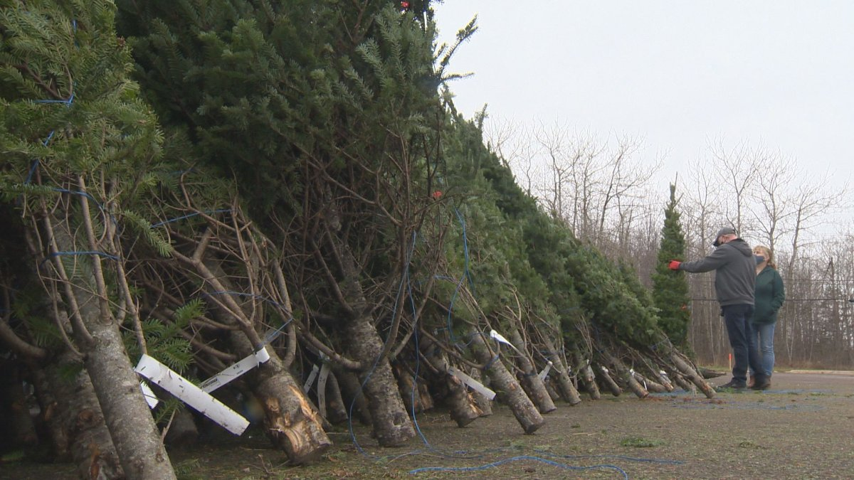 The Winnipeg Fire Paramedic Service is warning Winnipeggers about the fire hazards of real Christmas trees.