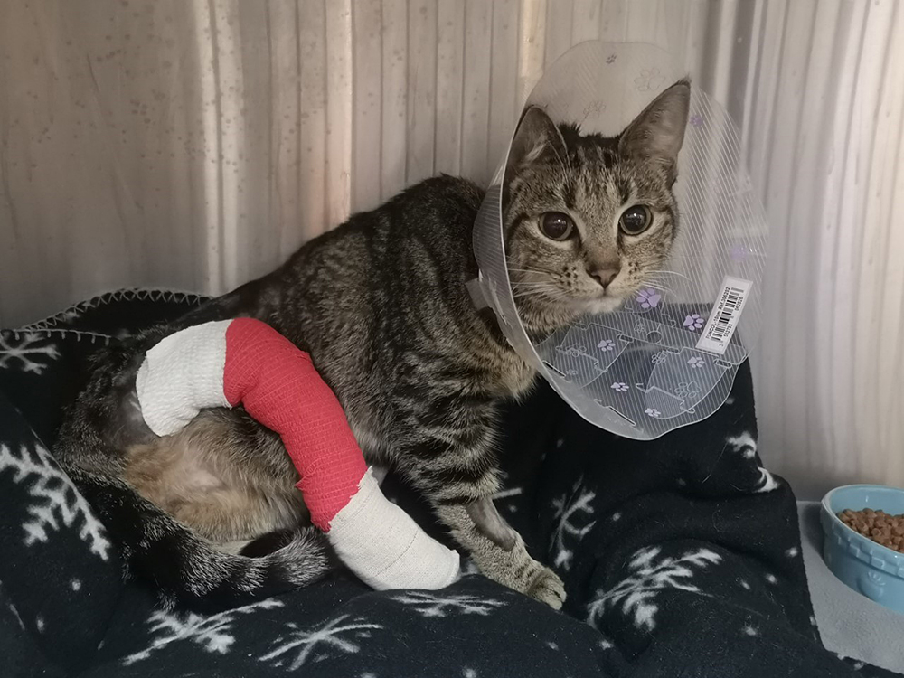The B.C. SPCA says Holly was found outside an emergency vet clinic in Kelowna, crying, shivering and suffering from a serious leg injury.