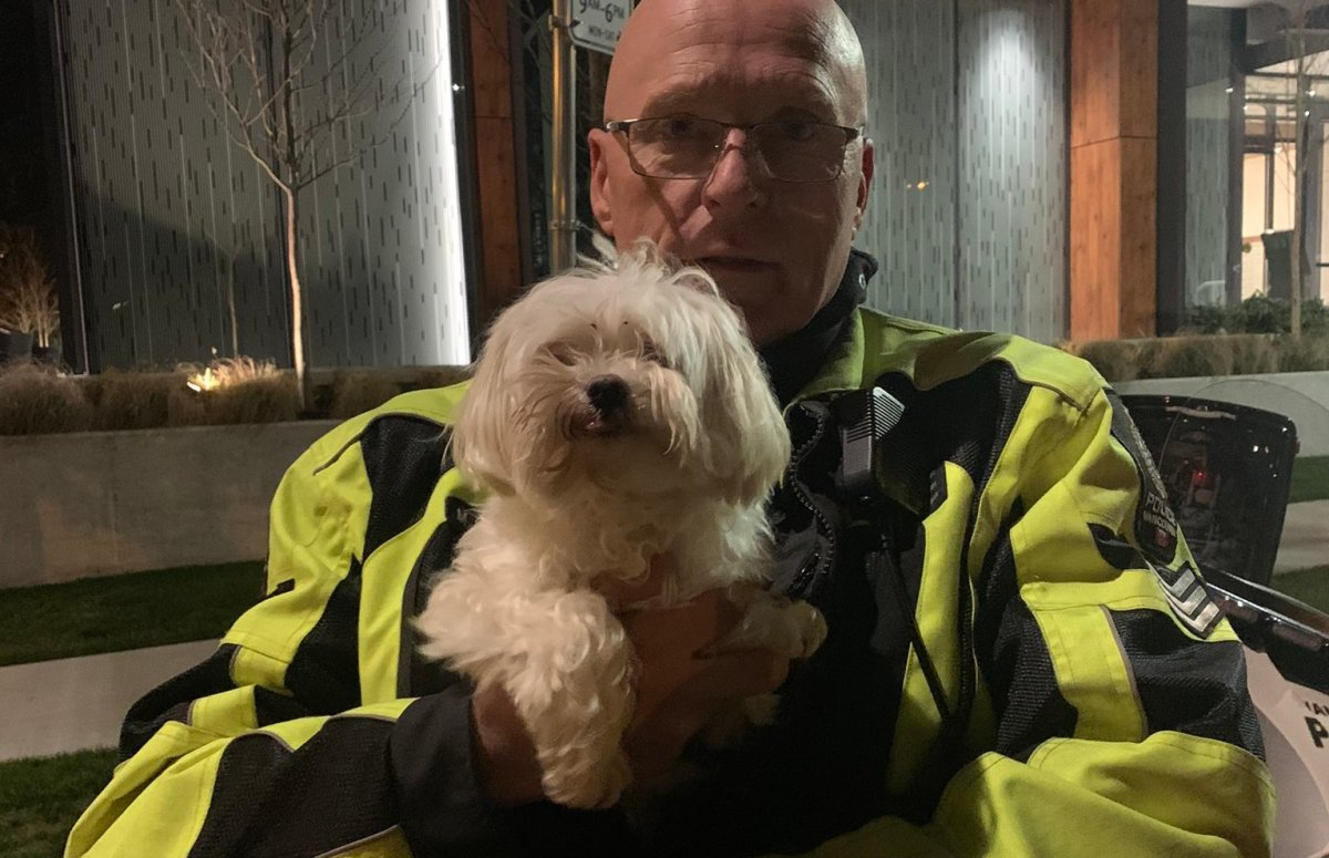 Bella, a Vancouver Maltese, is home safe after a joyride on a delivery truck this week.