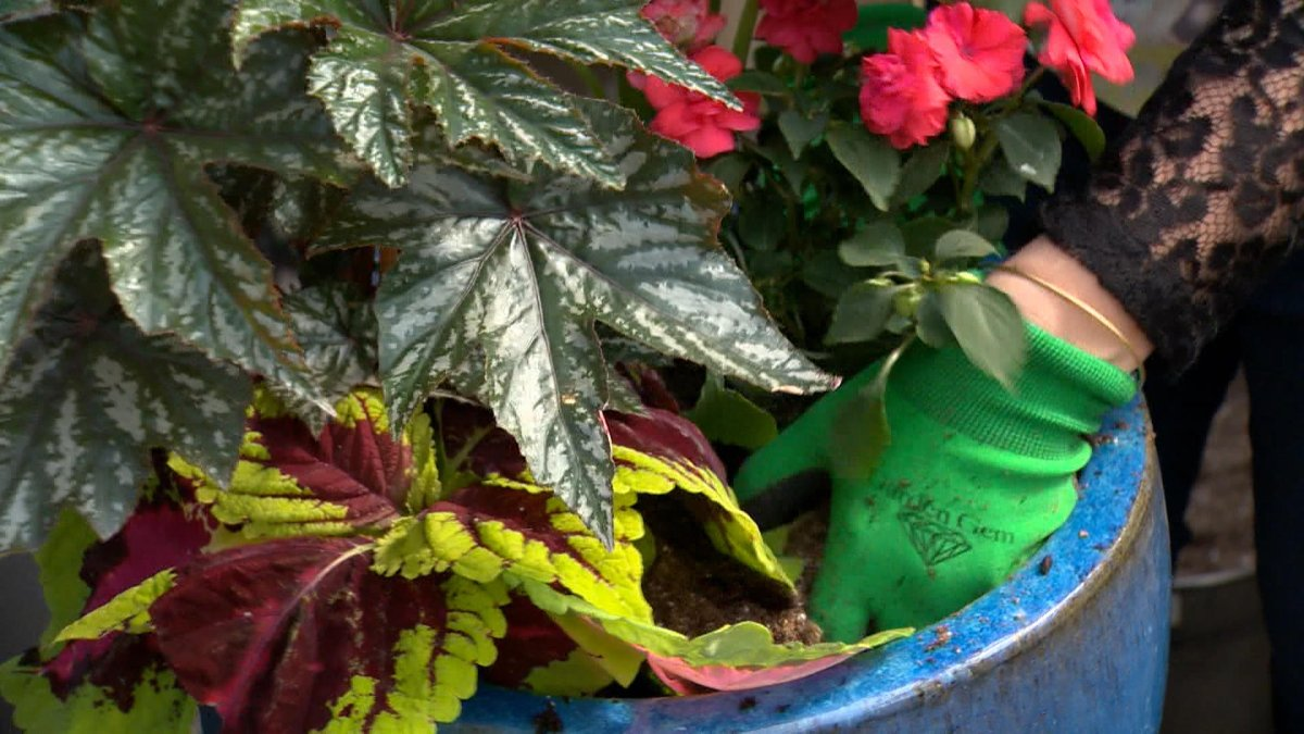 Kait Waugh and others in the plant world say millions of Canadians working from home and dealing with pandemic stress have spurred a growth in demand for greenery.