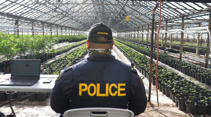 Over the last two years, investigators say they've also executed 152 warrants across Ontario and seized more than 180,000 cannabis plants, as well as more than $3.2 million in Canadian currency.