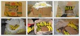 Continue reading: 21 bricks of cocaine found hidden in banana shipments: Kelowna RCMP
