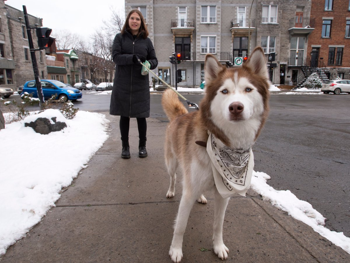 Ita Skoblinski walks her dog Waylon, Tuesday, January 12, 2021 in Montreal. Skoblinski adopted her dog during the pandemic and posted a joking offer online to let people walk her dog after curfew and got tons of answers.
