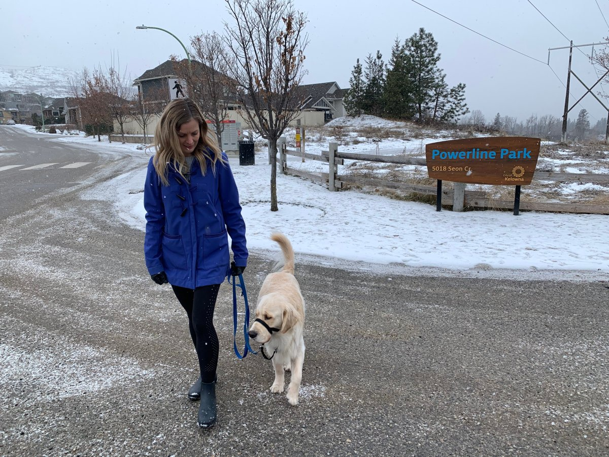 Stephanie Lisk's dog Chester started feeling sick after he apparently ingested some cannabis while out for a walk on Monday.