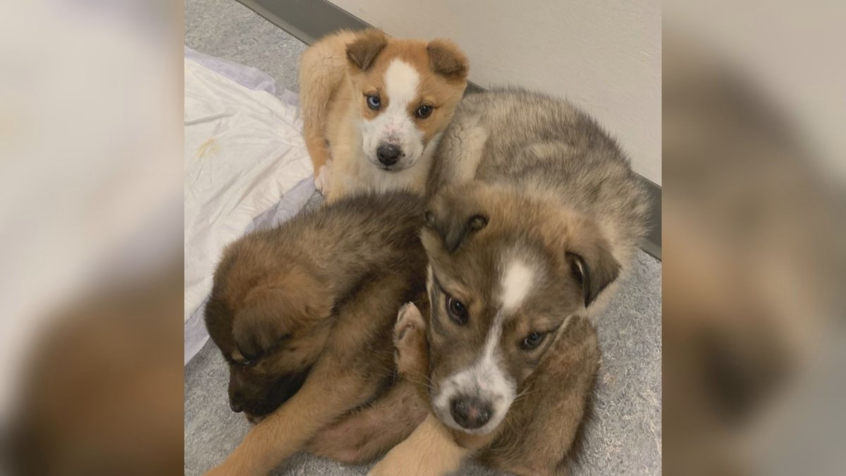 Puppies were abandoned along an Alberta highway on Jan. 14, 2021.