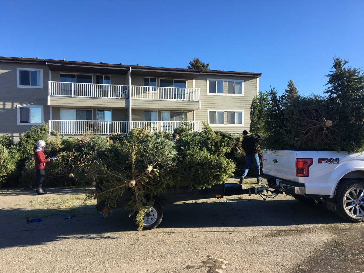 Christmas trees being dropped off at the Nicholas Sheran Leisure Centre parking lot on Jan. 9, 2021.