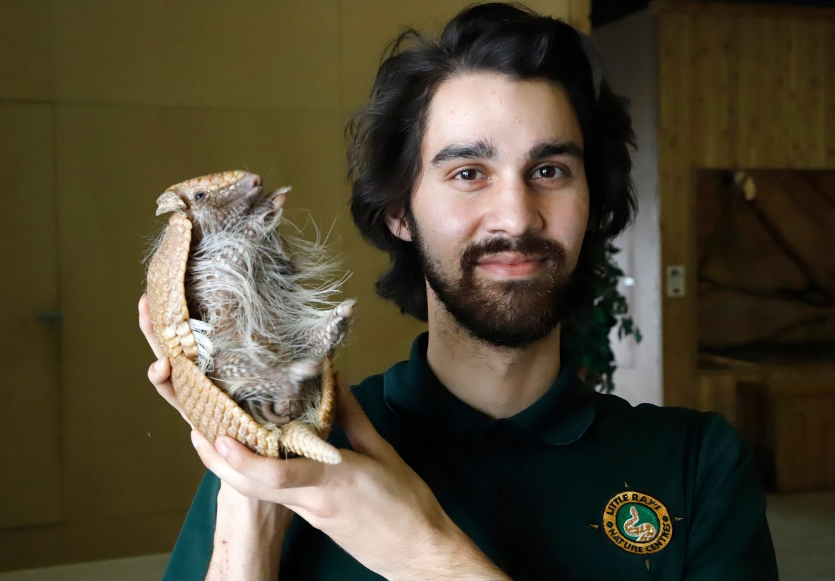 Zookeeper Alex Leclerc poses for a photo with Artie the three-banded armadillo at Little Ray's Nature Centre in Sarsfield, Ont. on Thursday, February 18, 2021.