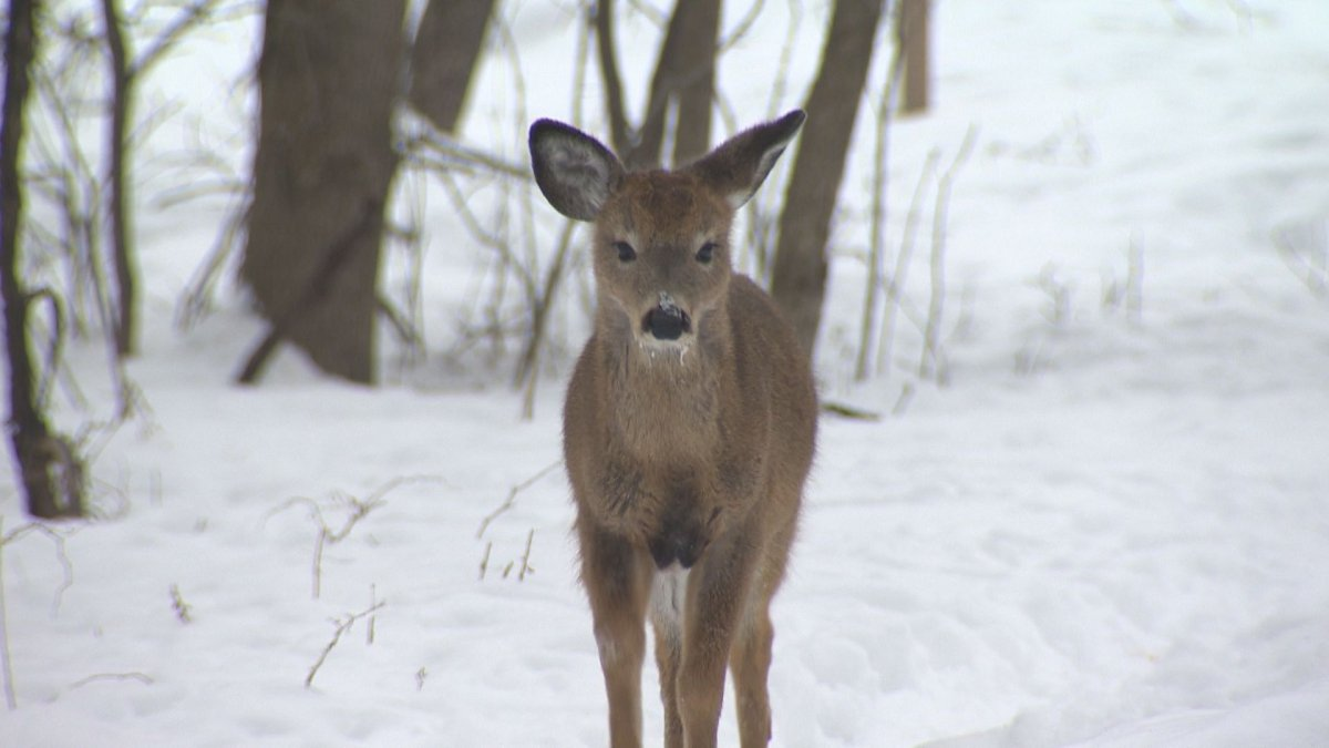 Officials with Saskatchewan's Ministry of Environment said supplemental feeding of wildlife during the winter can have unintended consequences.