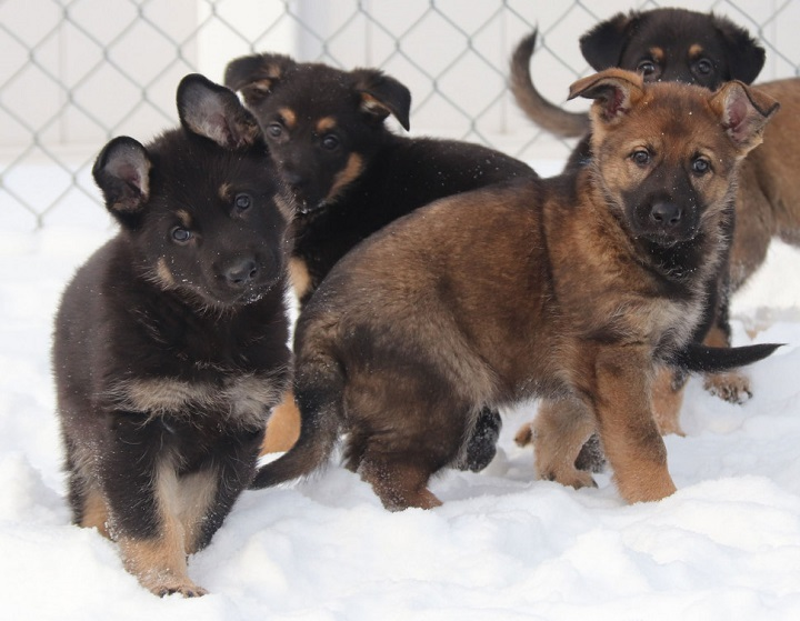 The RCMP is asking for children to submit possible names for its newest K9 members.