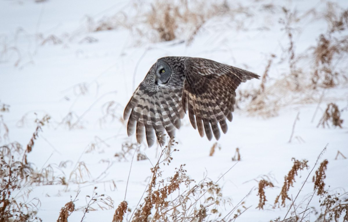 Guided wintertime tours offer chance to catch glimpse into ...