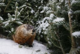 Continue reading: Shubenacadie Sam predicts an early spring in 2021