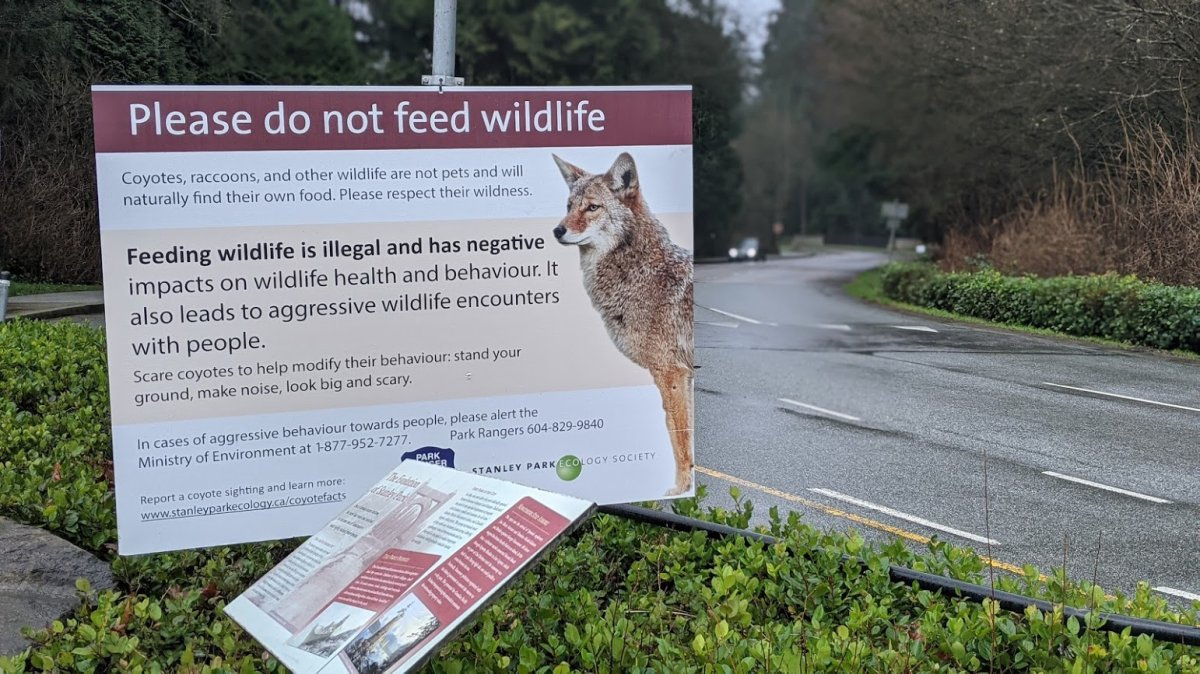 A sign posted in Stanley Park warns people not to feed coyotes in January, 2021.
