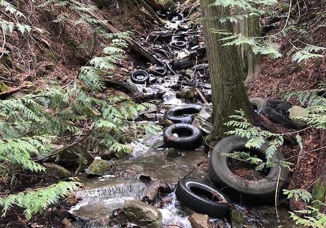Volunteers waiting for green light to remove tires littering Okanagan creek - image
