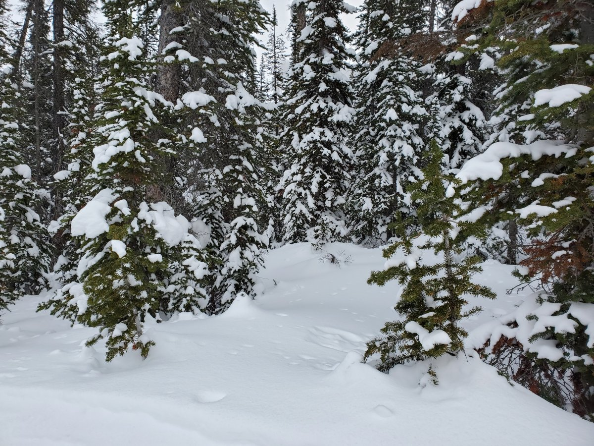 Snowy trees at Sunshine Village in Banff National Park on Feb. 25, 2021.