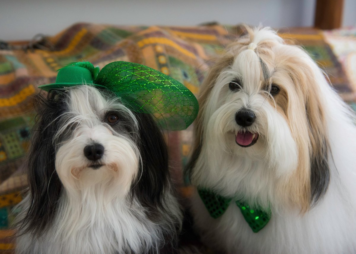 Spicy and Cooper dress up for the big day.