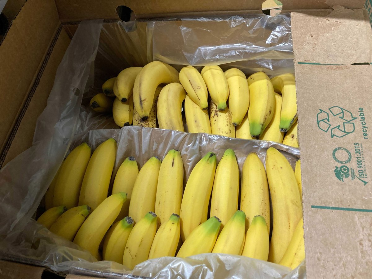 Bananas donated to the Leftovers Foundation in Calgary are shown in this recent handout photo. A Calgary not-for-profit is trying to find creative uses for some of the 340 cases of donated bananas it received at once last week. THE CANADIAN PRESS/HO - Audra Stevenson.