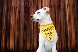 Continue reading: City of Calgary animal adoptions to be managed by AARCS during 3-month pilot