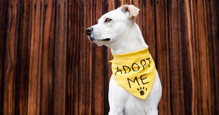 City of Calgary animal adoptions to be managed by AARCS during 3-month pilot