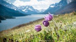 Continue reading: Alberta tourist destinations prepare for another uncertain season amid COVID-19