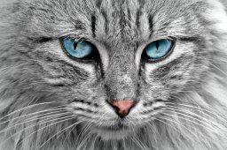 Continue reading: Stowaway cat attacks pilot on passenger flight, forcing emergency landing