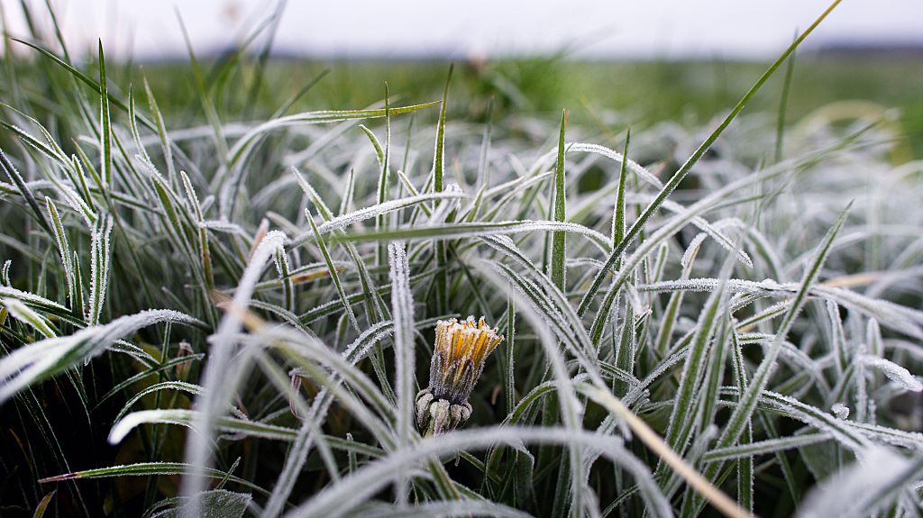 Frost advisory in place for London-Middlesex; overnight low set to dip to -1 C - image