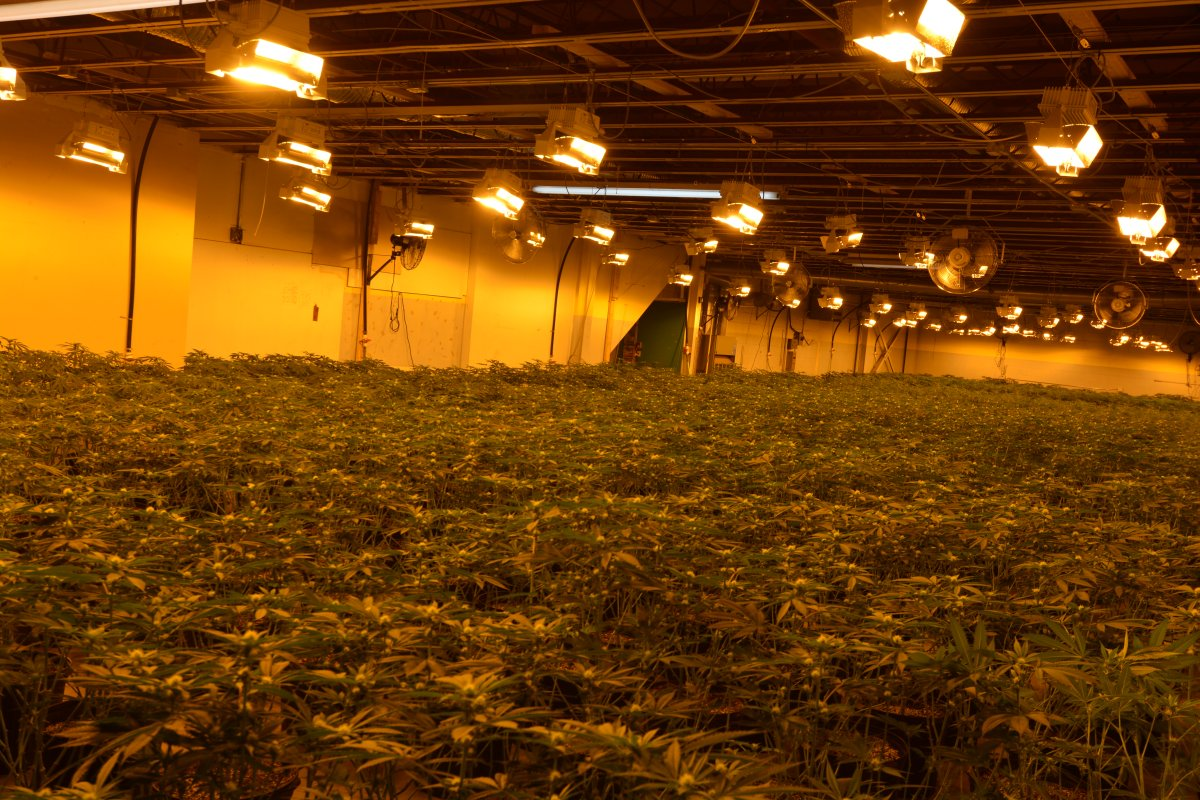 A  joint-taskforce with Belleville police and OPP seized thousands of cannabis plants from an east end industrial complex in Belleville last weekend.
