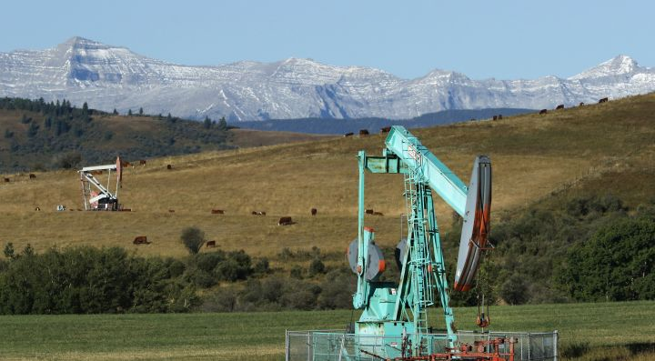 Oilfield pumpjacks, belonging to Crescent Point Energy, work producing crude and beef cattle graze in pasture near Longview, Alberta on Sept. 10, 2020. The Rocky Mountains are visible in the distance.