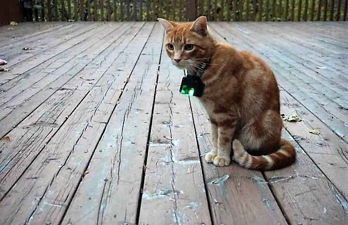 University of Guelph researchers want to know what cats do when they are outside.