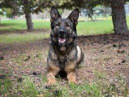 Continue reading: Police dog helps nab suspect in Portage la Prairie carjacking