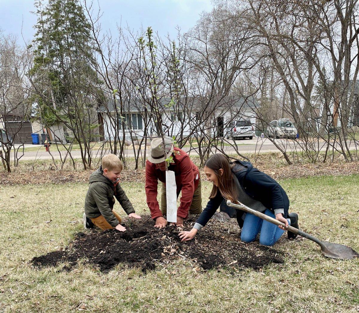 Million Tree Challenge kicks off to save Winnipeg's canopy - image