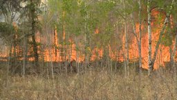 Continue reading: Animals evacuated as flames from Prince Albert wildfire encroach