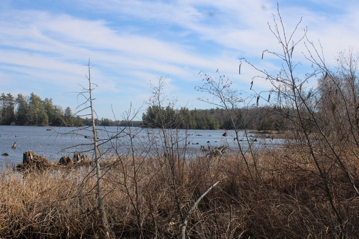 The Rideau Waterway Land Trust has acquired a new parcel of land at Chaffeys Lock for a nature reserve.