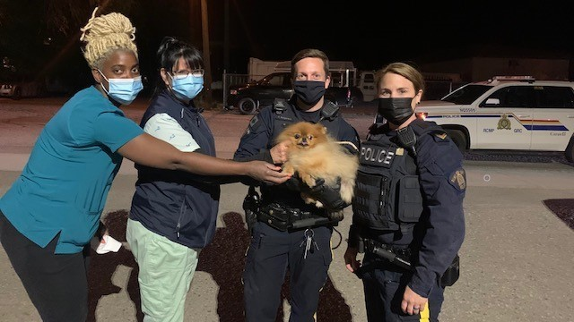 Police say a Pomeranian named Chocnut was stolen from the 3000 block of 24th Avenue on Tuesday, but was tracked down and returned to its owner that night.