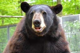 Continue reading: Brantford Twin Valley Zoo seeking public's help to keep animals fed