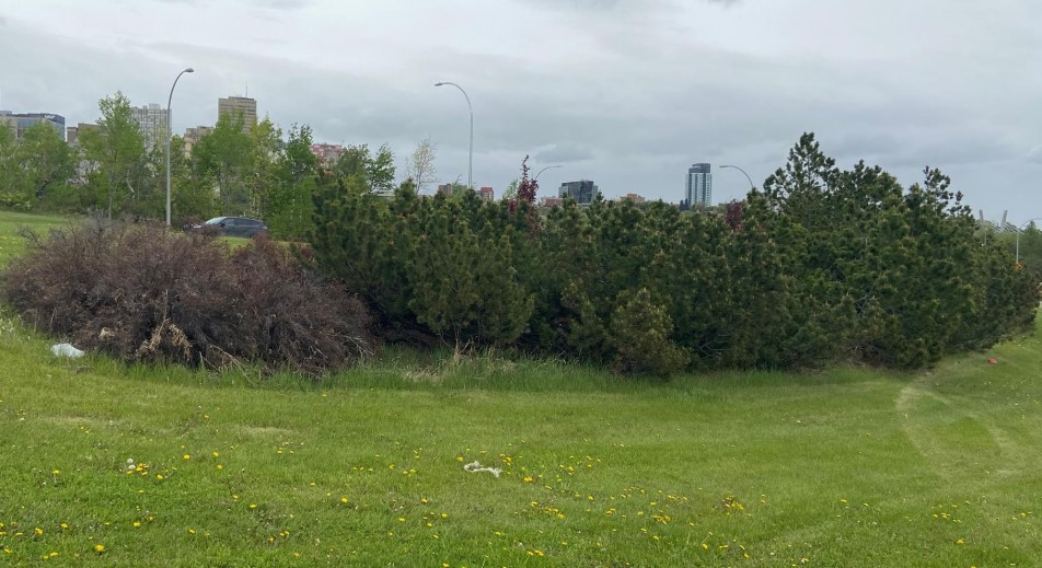 Funding for weed control in Edmonton was slashed this year, but now a committee is recommending council reverse that decision.