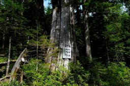 Continue reading: RCMP make 8 more arrests at Vancouver Island old-growth logging blockades