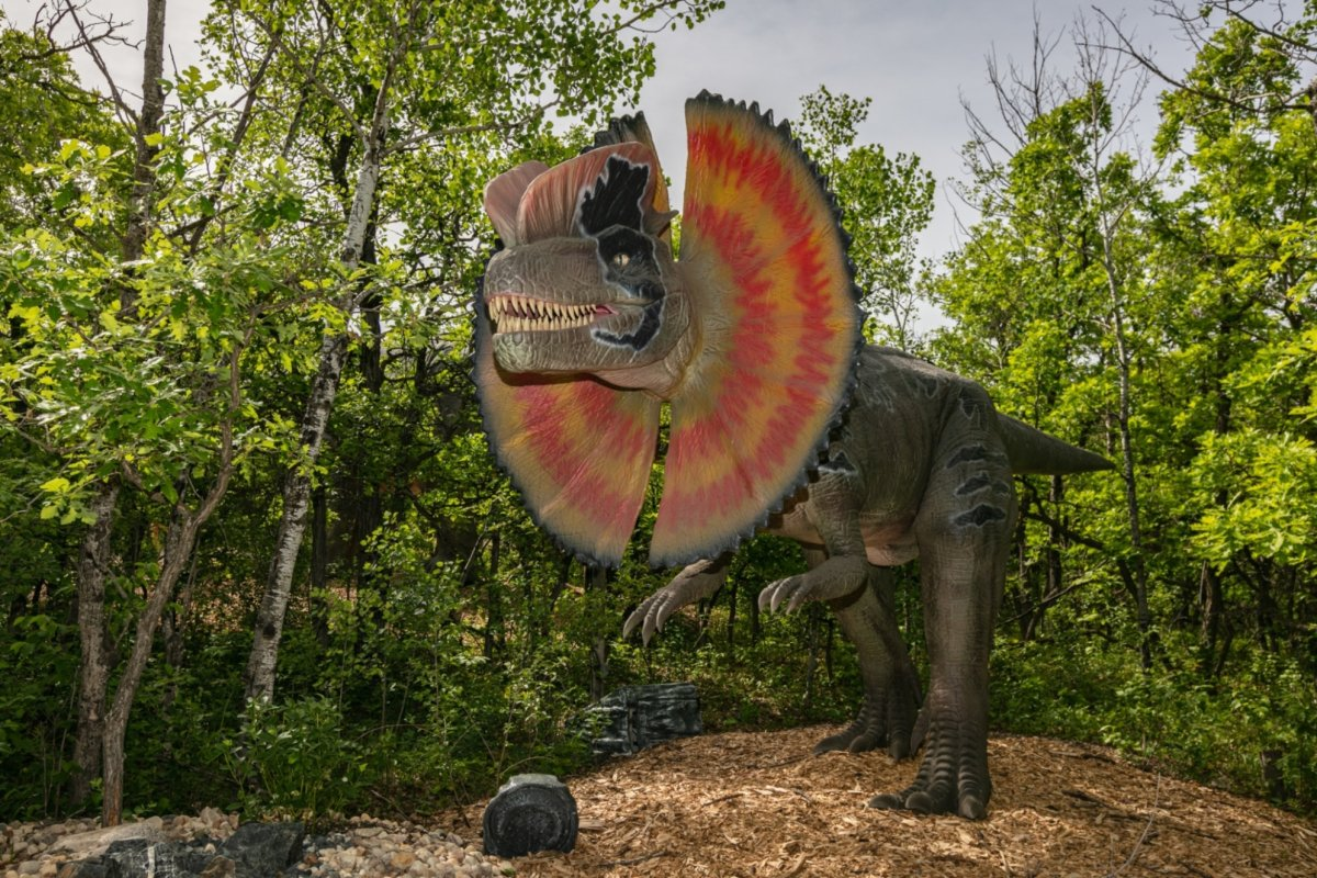Dinosaurs Uncovered will be open to the public at the Assiniboine Park Zoo.