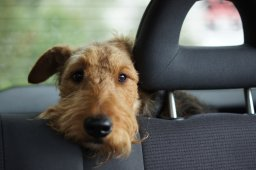 Continue reading: Winnipeg animal services warns not to leave your pets in hot vehicles