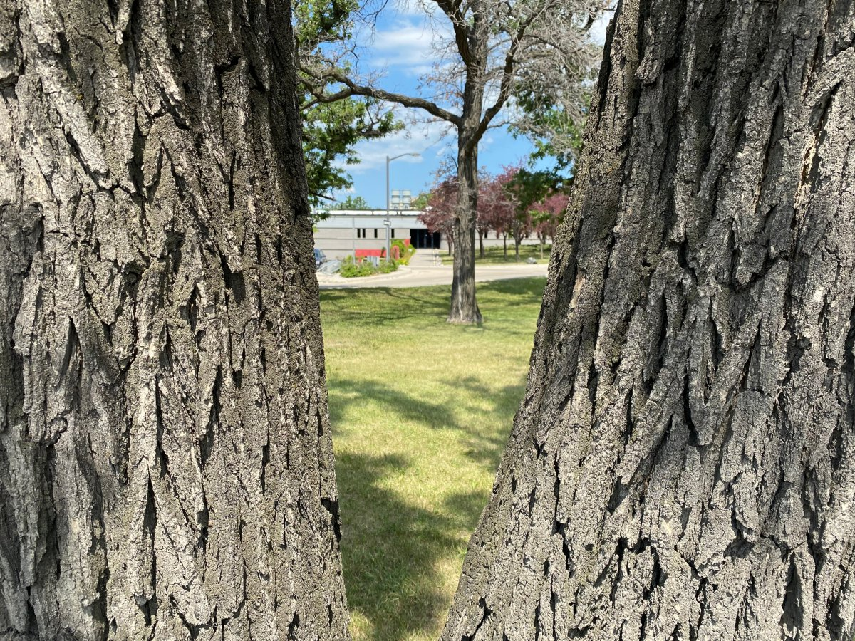 A piece of land at the former Assiniboia Residential School in Winnipeg could soon host a memorial featuring the names of all the students who attended.