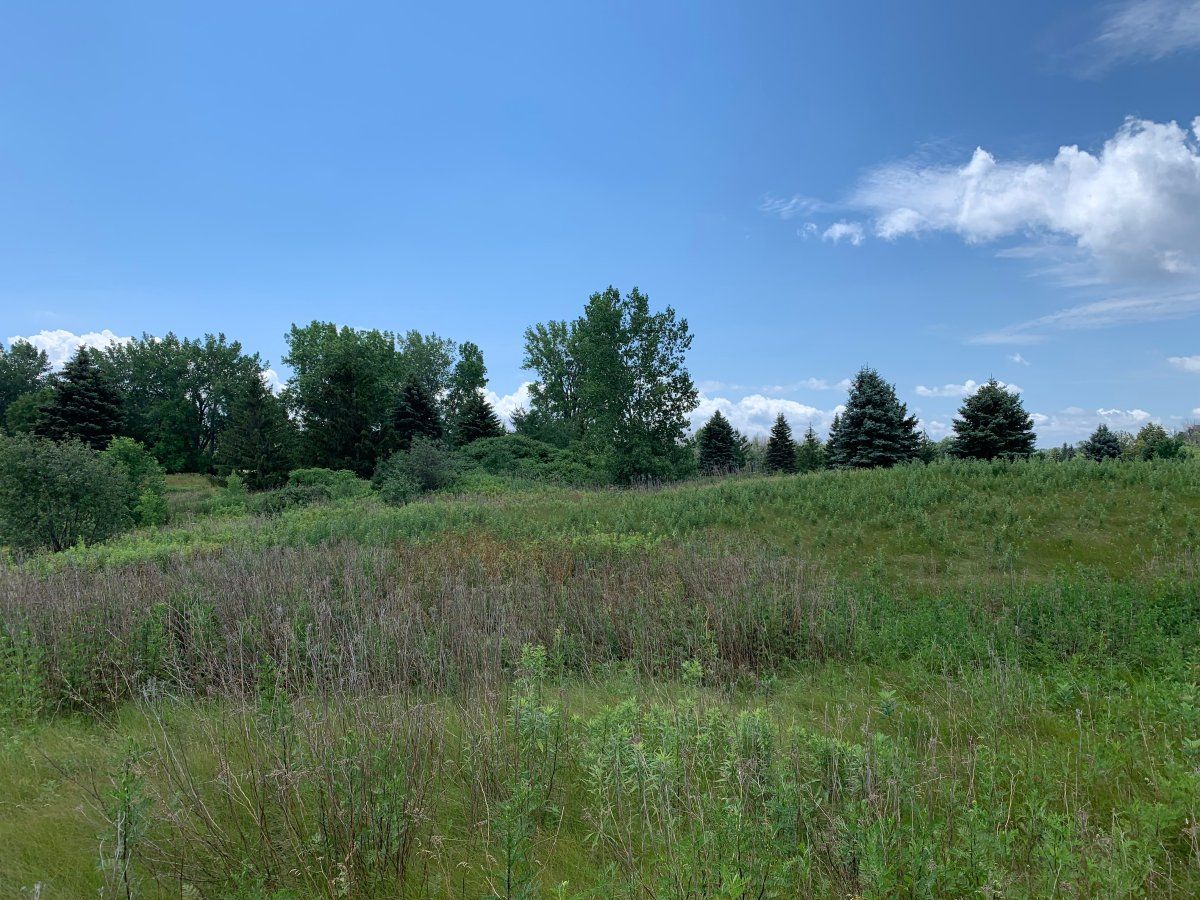 Green space near proposed site of Medicom plant to manufacture filters of N95 and other respiratory masks