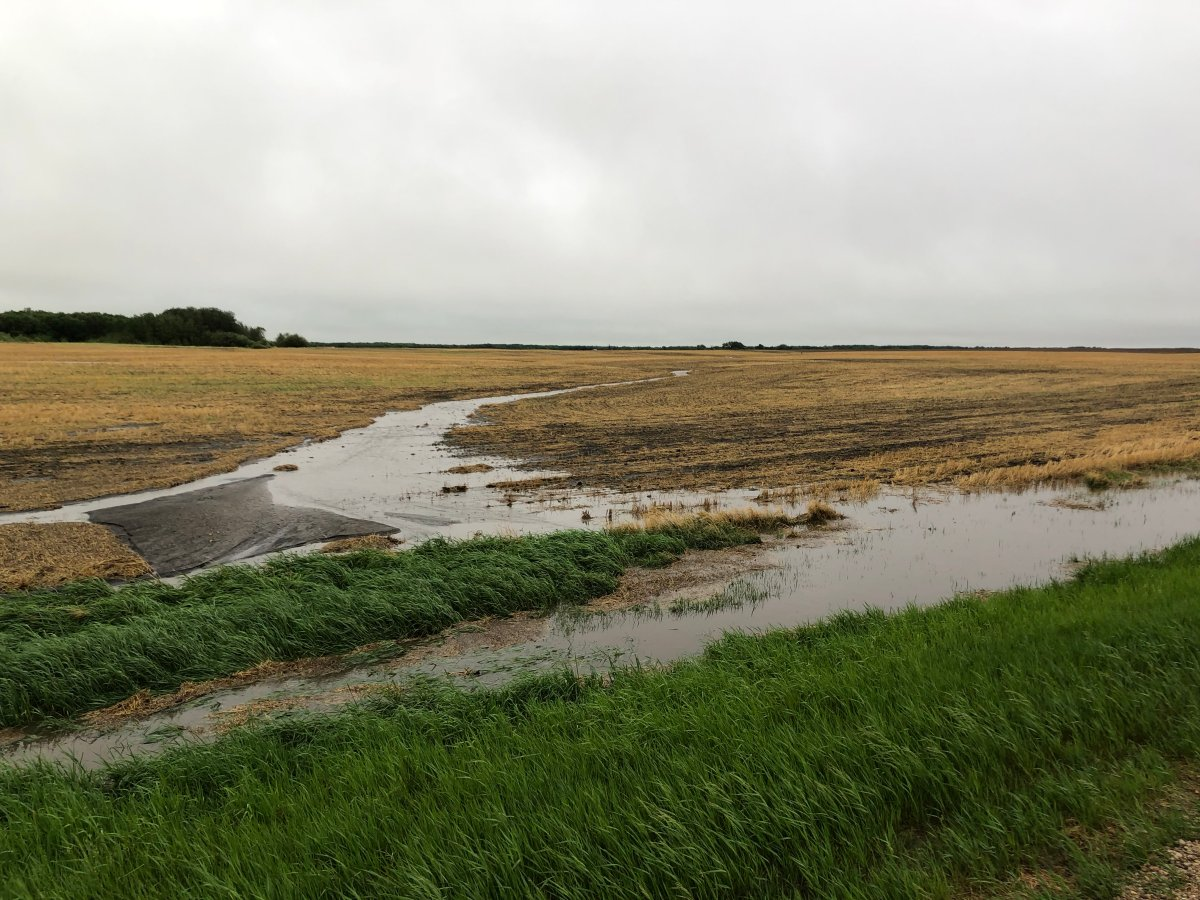 A field north of Brandon was doused with inches of rain overnight.