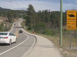 Continue reading: West Kelowna veterinarian asking motorists to slow down through turtle crossing